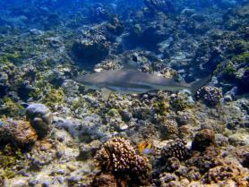 Maledivy - podmořský svět ostrova Helengeli