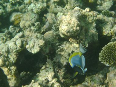 Severní atol Malé