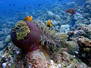 Maledivy a podmořský svět ostrova Helengeli