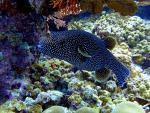 Maledivský podmořský svět
