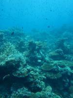 Maledivy a podmořský svět