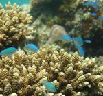 Podmořský život u Ari Atolu
