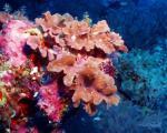 Krásy podmořského světa Malediv